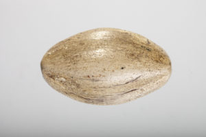 beige steatite oval bead rev